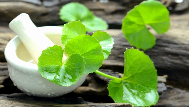 Impressive Benefits of Brahmi
