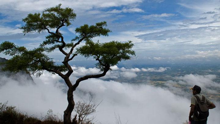 Nelliyampathy Hills Nenmara Palakkad