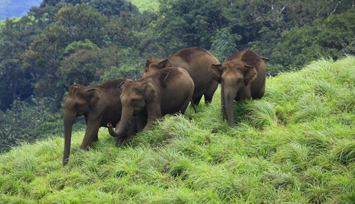 Chimmony Wildlife Sanctuary Mukundapuram Thrissur