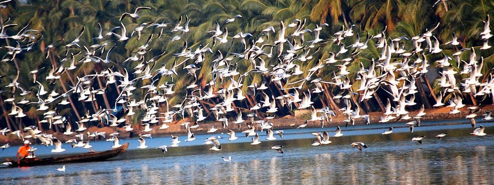 The Kadalundi Bird Sanctuary Kadalundi Malappuram
