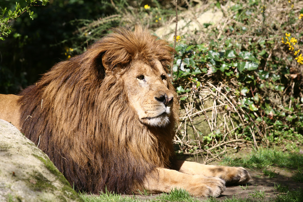 Lions Park Kozhikode Kozhikode Beach Kozhikode
