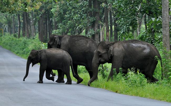 Muthanga Wildlife Sanctuary Muthanga Wayanad