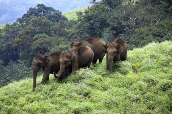 Aralam Wildlife Sanctuary Aralam, Thalassery Kannur