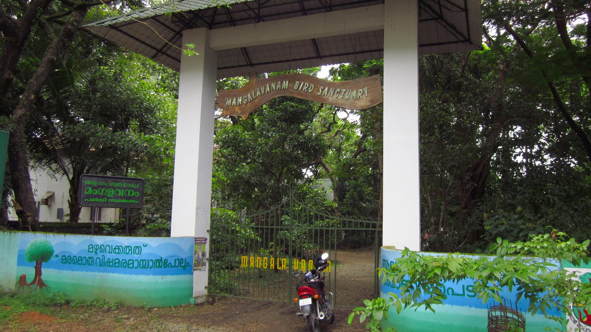 Mangalavanam Bird Sanctuary Kochi Ernakulam