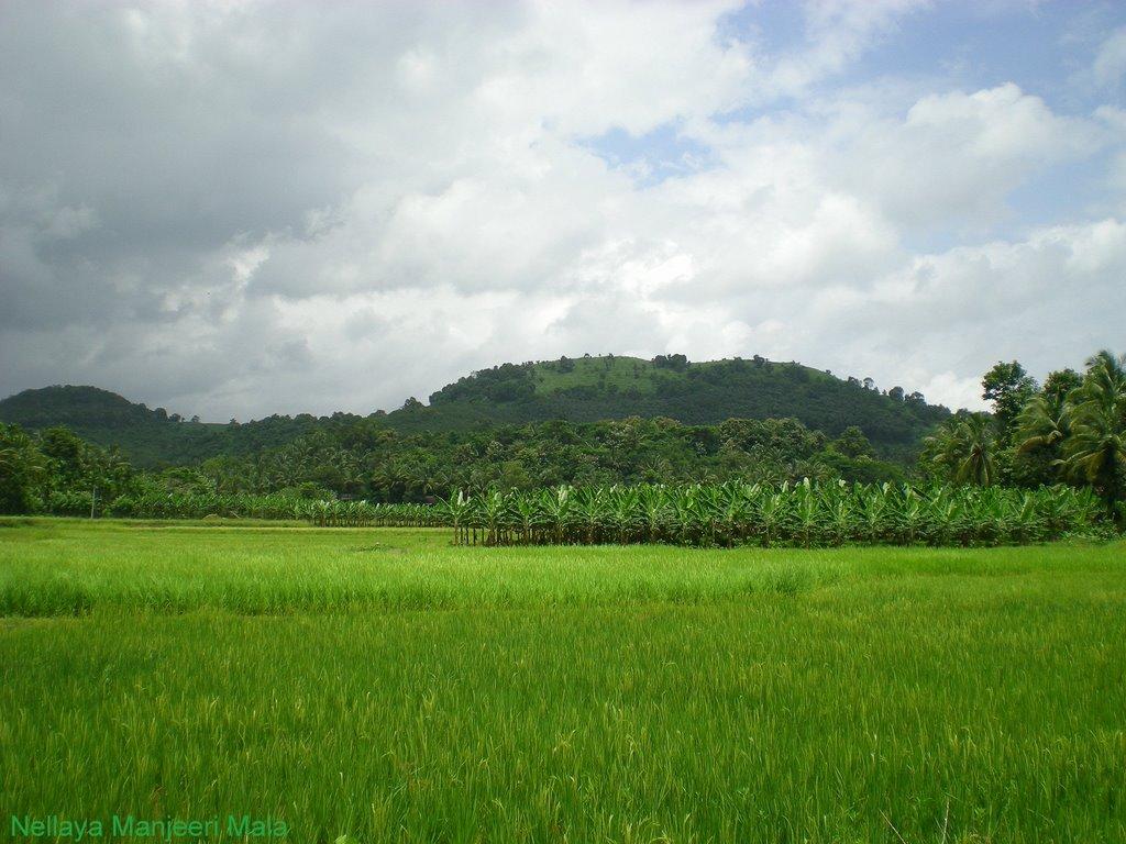 Nellaya Grama Panchayath Image