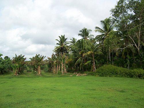 Sooranad South Grama Panchayath Sooranad South Kollam